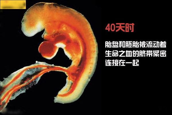 胎儿每月发育图_接吻到生子:高清图解造人全过程 _母婴频道_闻康资讯网