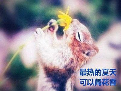 动物世界中的励志生活