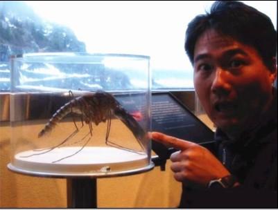 世界上最大的蚊子大到人脸