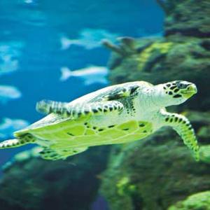 壁纸 动物 海底 海底世界 海洋馆 水族馆 鱼 鱼类 300_300
