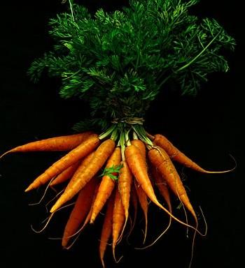 废物利用:用萝卜叶排毒的方法