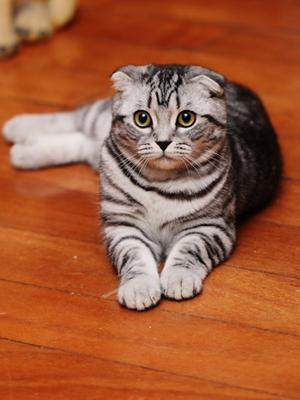 可爱的宠物精灵失去健康,今天小编就教给大家猫猫常见疾病及预防措施