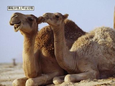 女性 全过程/是从骆驼开始的。