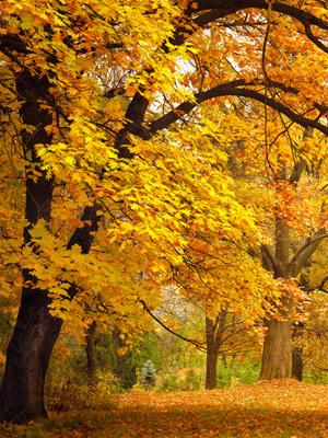 秋燥有哪些症状