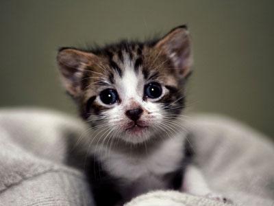 尤其是一些可爱的猫咪,这些女性的大爱.