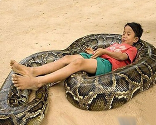 蟒蛇与柬埔寨6岁男孩相伴生活6年